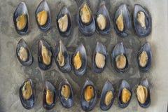 Kochen von Miesmuscheln in den Oberteilen lizenzfreie stockfotos