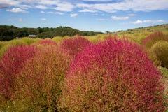 Kochiagebieden met mooie hemel bij Hitachi-Kustpark, Japan Stock Fotografie