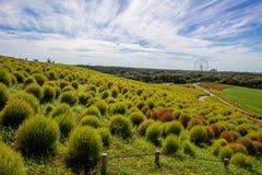 Kochiagebieden met mooie hemel bij Hitachi-Kustpark, Japan Stock Foto's