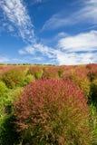 Kochiagebieden met mooie hemel bij Hitachi-Kustpark, Japan Royalty-vrije Stock Foto's