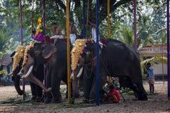 KOCHIN, INDIEN 24. FEBRUAR: Indische Elefanten 24, 2013 in Kochin, Stockbild