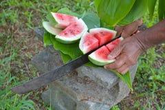 Kochinselbewohner schneidet Wassermelone mit langem scharfem Messer in Rarotonga Stockfotografie