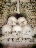 kości czaszki Zdjęcia Stock
