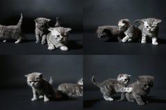 Koci się bawić się na ciemnym tle, ekranizuje rozłam w cztery częściach, multicam, Zdjęcie Stock