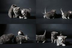 Koci się bawić się na ciemnym tle, ekranizuje rozłam w cztery częściach, multicam, Obraz Stock