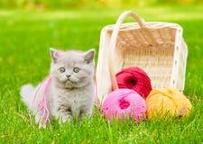 Koci się bawić się z gejtawami nić na zielonej trawie zdjęcia stock