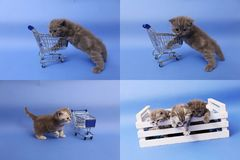 Koci się bawić się z wózek na zakupy, ekranizuje rozłam w cztery częściach, multicam, Obraz Royalty Free