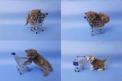 Koci się bawić się z wózek na zakupy, ekranizuje rozłam w cztery częściach, multicam, Zdjęcia Stock