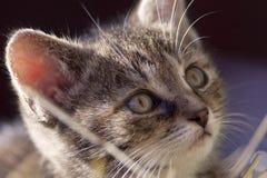 Koci się patrzeje up, młody śliczny dziecko kot obraz stock
