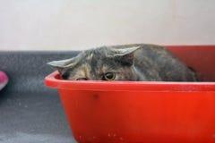 kociak przeraziła Fotografia Royalty Free