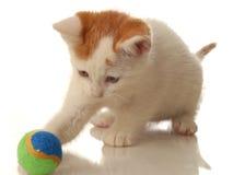 kociaki kulowego grać Zdjęcie Stock