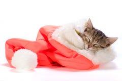 kociaki śpi Zdjęcia Royalty Free