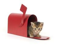 kociaki skrzynki czerwony Zdjęcie Royalty Free