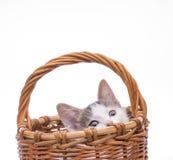 kociaki trochę zabawne odosobnione white Obraz Stock