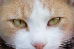 kocich oczu Obrazy Stock