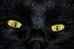 kocich oczu Obraz Stock