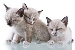 kocie, dziecko śpi Obrazy Royalty Free