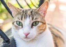 Kociej kot kiciuni Śliczna figlarka Kocia Zdjęcia Royalty Free