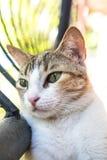Kociej kot kiciuni Śliczna figlarka Kocia Obrazy Stock