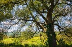 Kock Forest State Park royaltyfria foton