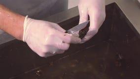 Kock i handsken som skurar rå musslor i vask vid kniven durkslag Restaurangkök Rengöra för process stock video