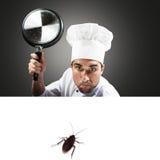 Kock som anfaller en kackerlacka royaltyfria bilder