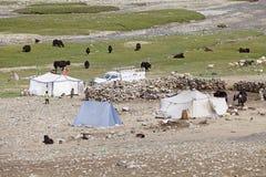 Koczownicy i yaks w Ladakh, India Fotografia Royalty Free