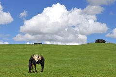 koczownika koński namiot Tibet Fotografia Royalty Free
