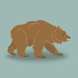 Kodiak angry bear Royalty Free Stock Image