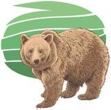 Kodiak bear. Illustration of a Kodiak Bear Royalty Free Stock Image