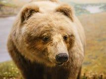 Kodiak Bear by River. A brown kodiak bear by a river royalty free stock photo