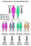 Kodominanz-Beispiel-Blutgruppe Lizenzfreie Stockbilder