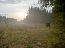Koe in bos stock fotografie