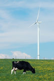 Koe die dichtbij een windturbine eet Stock Afbeeldingen