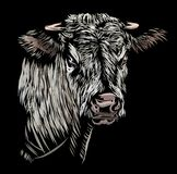 Koe die op een zwarte achtergrond wordt geïsoleerd Royalty-vrije Stock Fotografie