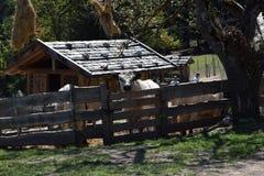 Koe in een landbouwbedrijf in bergen van southtyrolitalië Het landelijke Leven Royalty-vrije Stock Foto