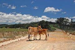 Koe en Kalf Royalty-vrije Stock Foto