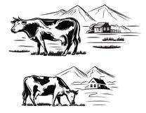 Koe en landbouwbedrijf Royalty-vrije Stock Afbeeldingen