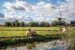 Koe en Windmolen Stock Afbeeldingen