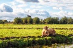 Koe en Windmolen Royalty-vrije Stock Afbeelding