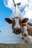Koe en windturbine Royalty-vrije Stock Afbeelding