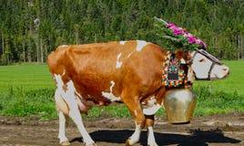 Koe met klok en bloemhoofddeksel voor een weide stock foto