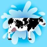 Koe op een blauwe achtergrond Stock Foto