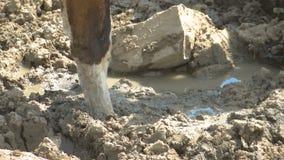 Koe` s voeten in de modder stock footage
