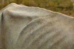 Koehuid, koe, huid Royalty-vrije Stock Foto's
