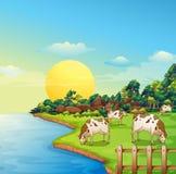 Koeien bij het landbouwbedrijf Stock Foto