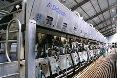 Koeien bij melklandbouwbedrijf Stock Afbeelding