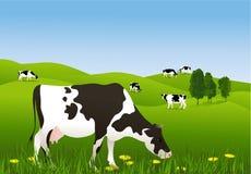 Koeien in de weide vector illustratie