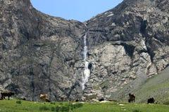 Koeien dichtbij waterval Stock Afbeeldingen
