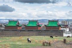 Koeien die dichtbij de bouw van Guden-Som weiden Stock Fotografie